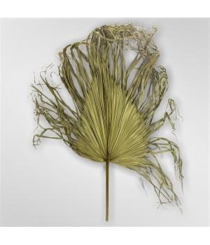 Декоративные листья пальмы