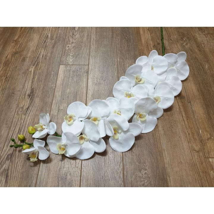 Крупная ветка орхидеи