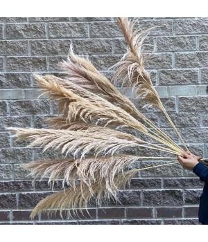 Трава пампасная декоративная