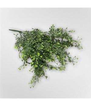 Зелень декоративная мелкая