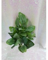Букет зелени