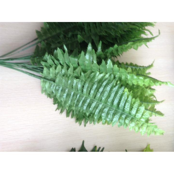 Листья папоротника